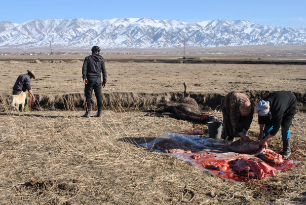 two Kyrgyz women handling bloody horse organs in a field with snowy mountains behind