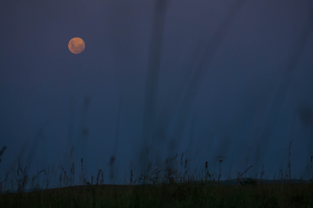 a full moon in an indigo sky with tall grasses below, Mozambique