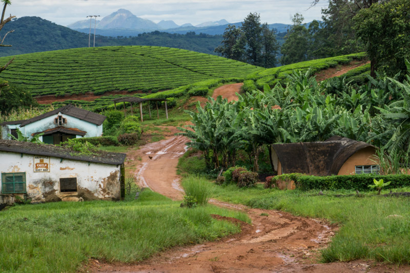 a windy dirt road running through Zimbabwe tea plantations and beside old buildings