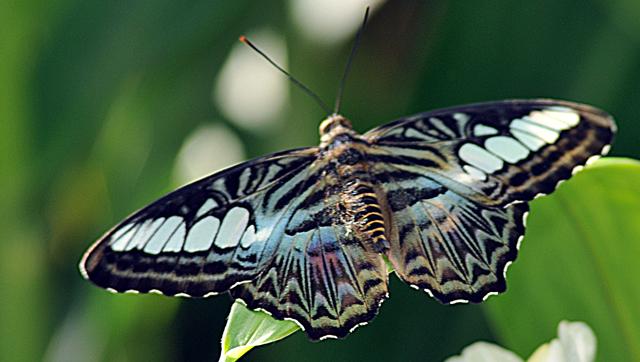 DSC_8949-Butterfly