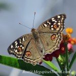 DSC_9133-butterfly