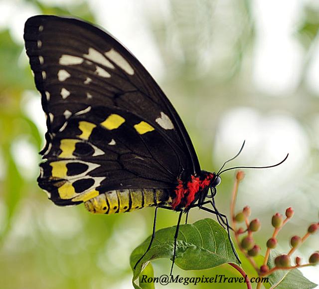 _EMG2493-blog-birdwing-fema
