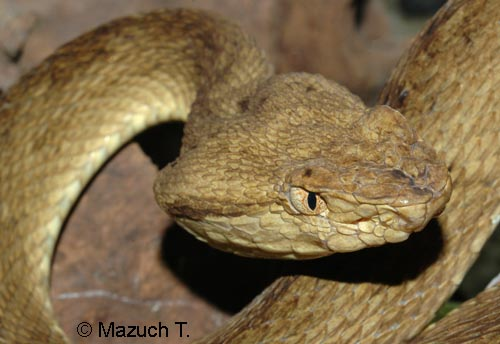 Photographs Of Other Reptiles