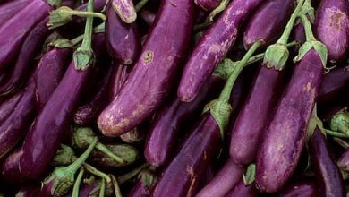 Photo of İran'da patlıcan yağdı iddiası
