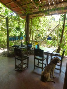 some of the dogs and the plants at Hostel Nahual
