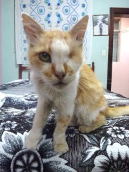 mitch -- he was my favorite house kitty. 16 years young and looking like a true war hero =)