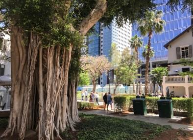 Sarona Tree, Tel Aviv, Rick Meghiddo
