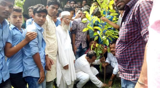 কমলনগরে এমপি প্রার্থী সাজুর বৃক্ষ রোপন
