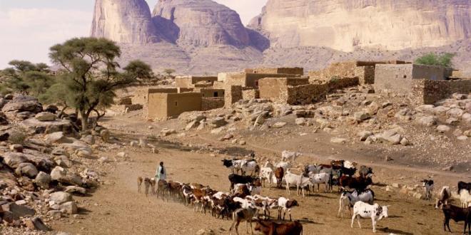 peulh-berge-animaux-troupeau-mouton-vache