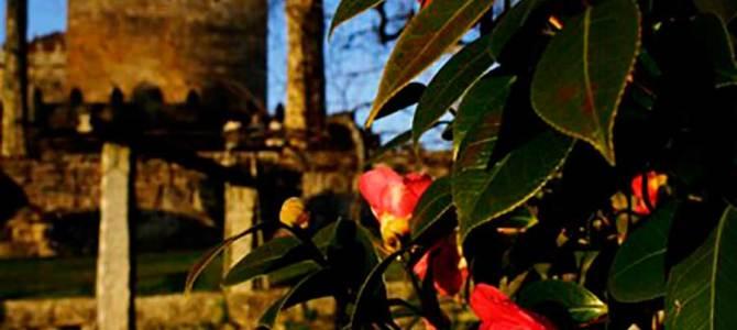 Descubrir Rías Baixas a través de su patrimonio