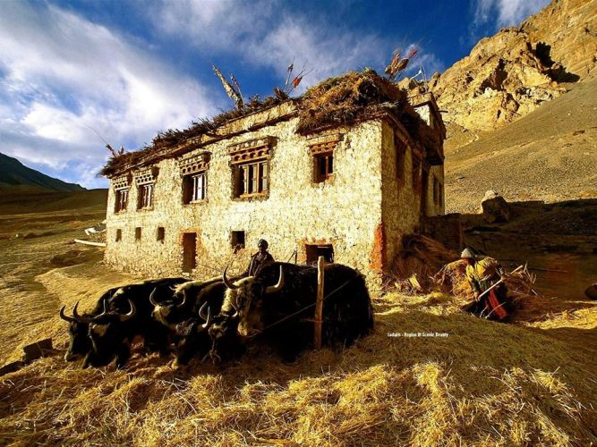 Traditional Ladakhi house.