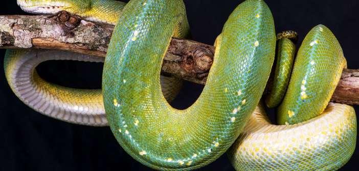 Meilleurs Accessoires Serpent en 2020