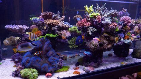 Quels sont les meilleurs accessoires aquarium