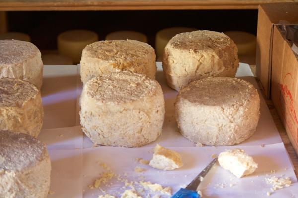 成熟度最高的 pecorino奶酪