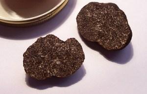 黑松露(Tuber melanosporum),Dpotera拍摄
