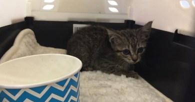 Diese kleine Katze hatte sich im Motorraum eines Elektroauto Tesla Model S versteckt. Bildquelle: John Griswell
