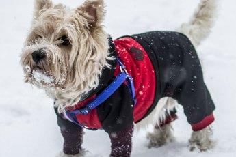 Hund-Fashion-Accessoires