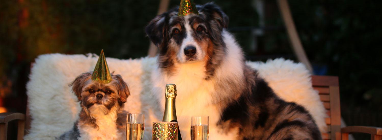Hund-und-Silvester