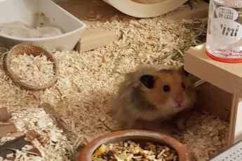Leitfaden-artgerechte-Hamsterhaltung
