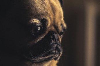 Ängste-von-Hunden