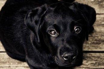 Hund-Augenpflege