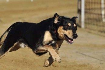 Hundesprache-verstehen-lernen