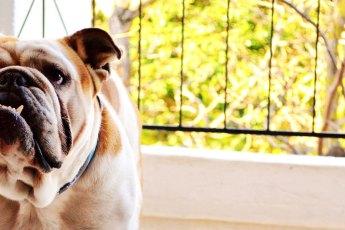 Krankenversicherung-für-Hunde