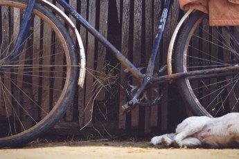 Radfahren-mit-Hund