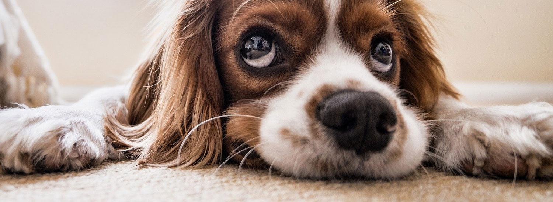 Sensible-Hunde
