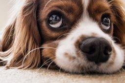 Sensible Hunde – wie geht man am besten mit ihnen um?