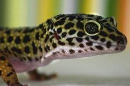 Dein Leitfaden für die artgerechte Haltung von Geckos