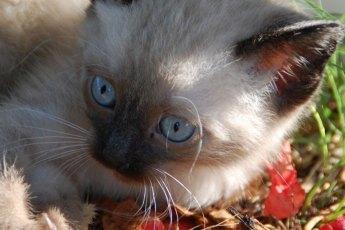 Katze-Insekt-gefressen