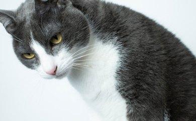 Katzenstreu-Ratgeber