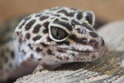 Dein Leitfaden für die artgerechte Haltung von Leopardgeckos