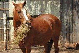 Die große Ernährungsfibel für dein Pferd
