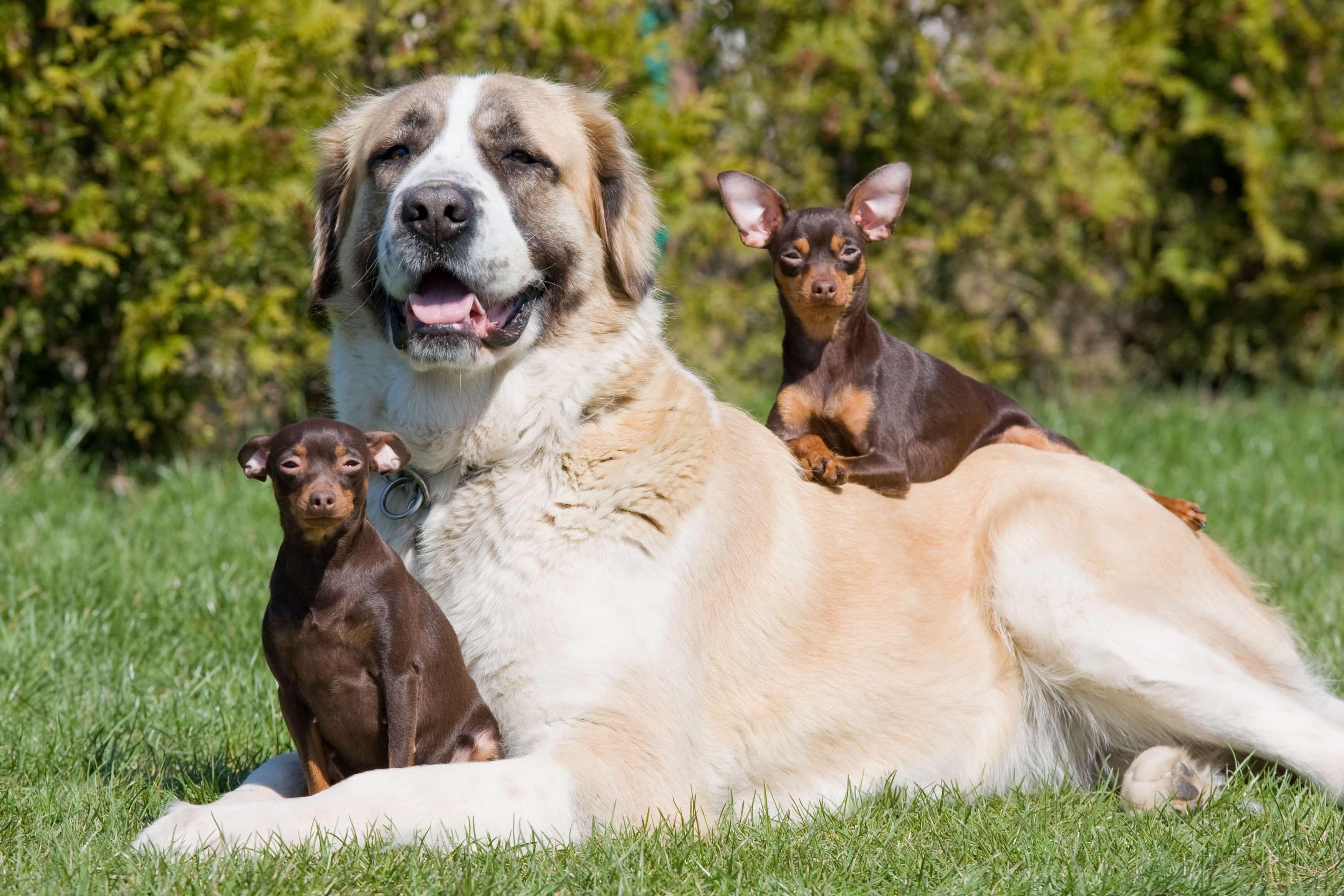 Beliebtesten Hunderassen Deutschlands Im Jahr