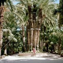 Riesige Palmen