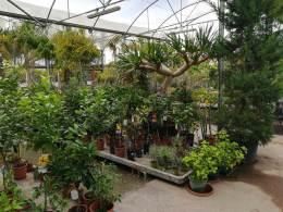 Pflanzen für Draußen