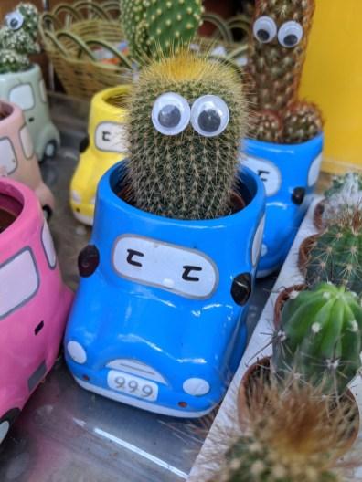 niedlicher Kaktus für die Tochter