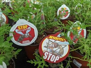 Pflanzen gegen Moskitos