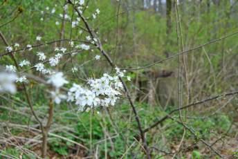 Kennt ihr diese kleinen, weißen Blüten auch?