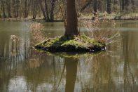 Magisch wie sich der Baum im Wasser spiegelt