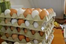 Die berühmten Salzdahlumer Freiland Eier