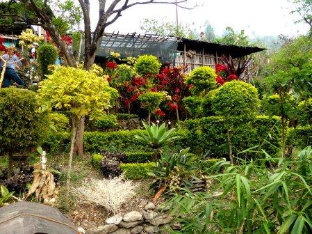Darjeeling-2015-48