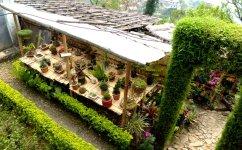 Darjeeling-2015-50
