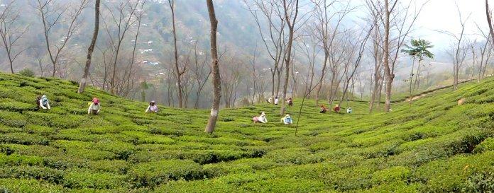Darjeeling-2015-70