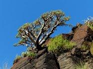 Die Natur erobert den Fels