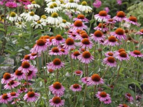 gartengestaltung pflegeleichte pflanzen den garten pflegeleicht gestalten - mein schöner garten