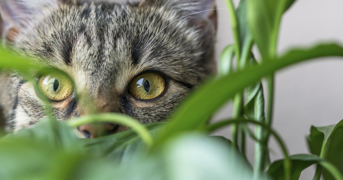 Giftige Und Ungiftige Pflanzen Für Katzen Mein Schöner Garten
