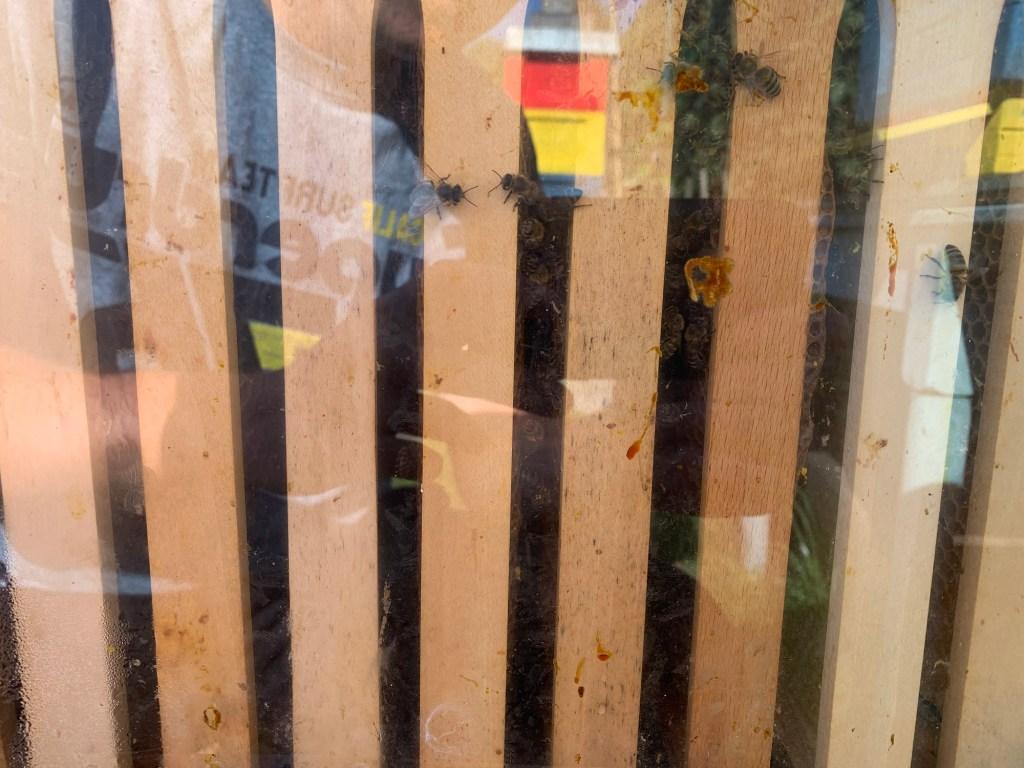 Bienenbox Volk 6 Sicht durch das Fenster